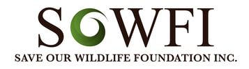 SAVE OUR WILDLIFE FOUNDATION INC.
